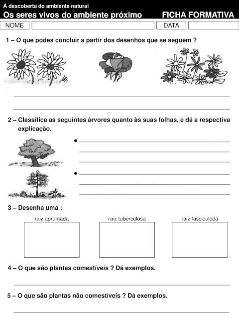 atividades sobre plantas 4o ano