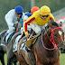 26 Kasim ŞANLIURFA'da Koşacak Atların Galopları, Galop Dereceleri