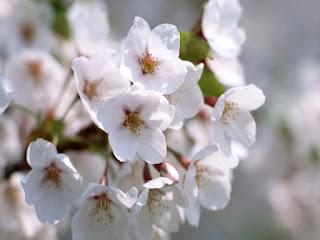 رمزيات زهور حلوة