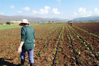 Αποτέλεσμα εικόνας για παραχώρηση αγροτεμαχίων