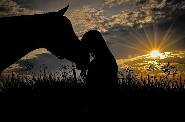 Kisah Inspirasi Hidup: Belajar dari Seekor Kuda