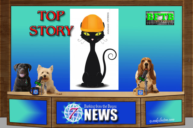 BFTB NETWoof Dogs News with black cat in hardhat on back screen