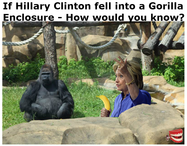 Chattering Teeth If Hillary Fell Into A Gorilla Enclosure