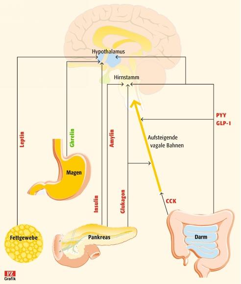 Dopamin Glückshormon
