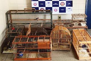 Comércio ilegal de pássaros