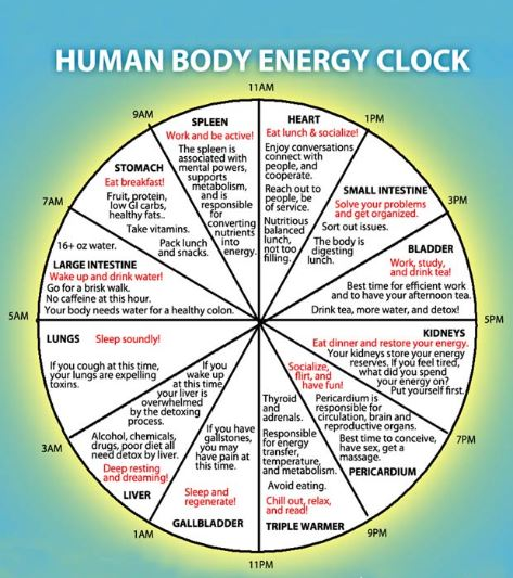 Chinese Body Clock