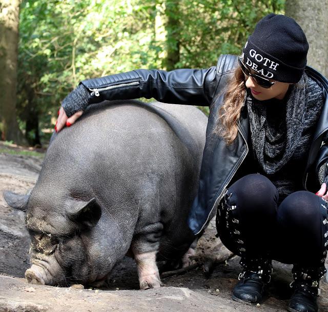 Wildpark Schwarze Berge #Schweineliebe