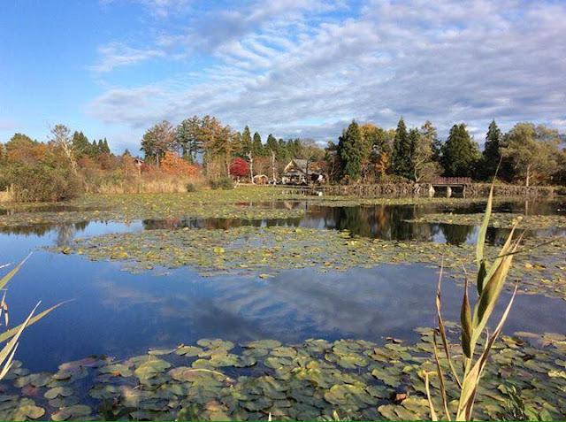 妙高高原いもり池の写真