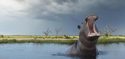 Hipopotamo y ambiente