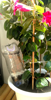 blommbevattning, vattna blommor på semestern, självvatnningssystem, självvattna blommor, trädgårdstips, blogg om trädgård, mittljuvahem, mitt ljuva hem,