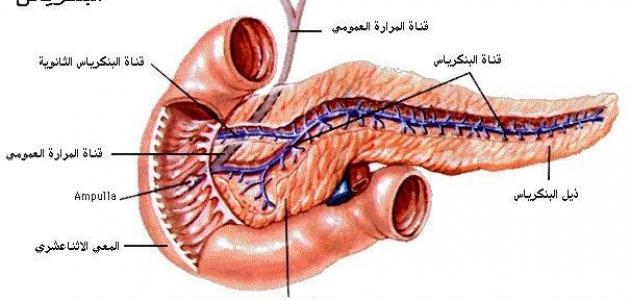 الجهاز الهضمي في جسم الإنسان
