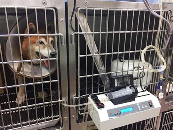 高雄動物醫院,貓醫院,外科氣體麻醉,腫瘤治療,中藥針灸
