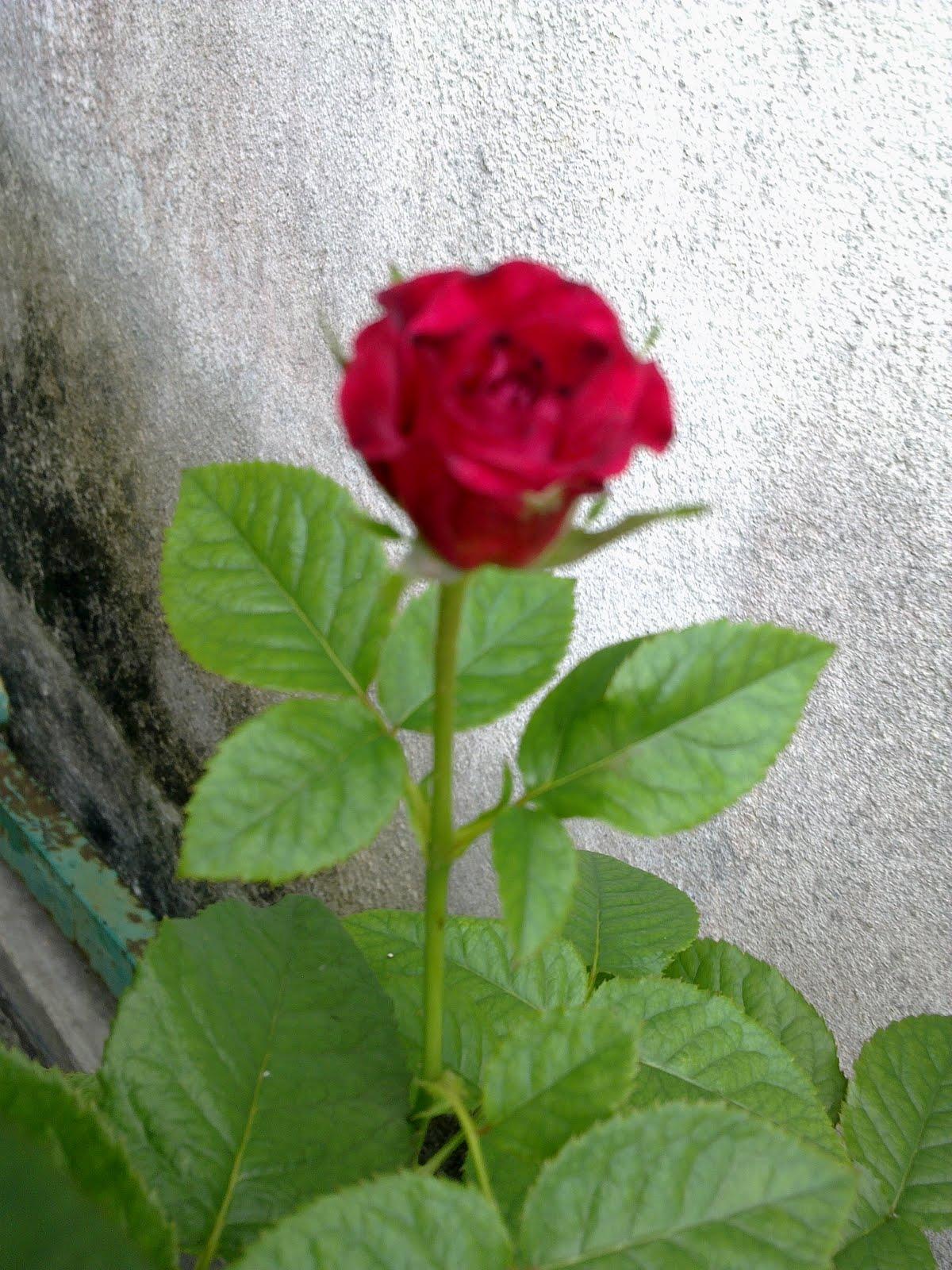 Gambar Bunga Yang Bagus Untuk Wallpaper