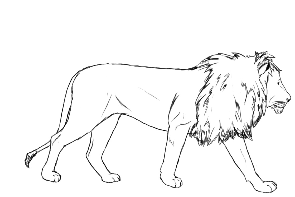 How To Draw A Lion - Draw Central