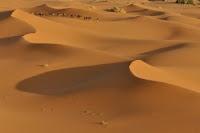 Il profugo nel deserto