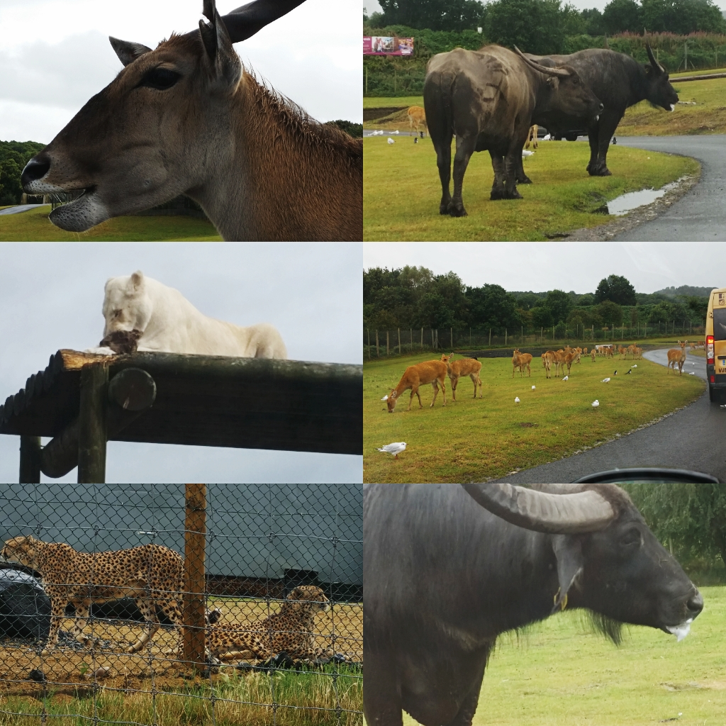West Midlands Safari Park Blog