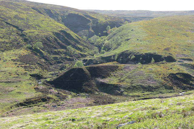 A deep clough in the side of the moor with landslips and trees growing within it.