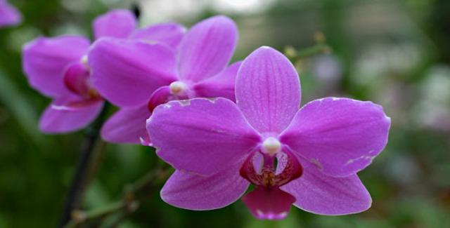 Pictures Of Beautiful Hawaiian Flowers
