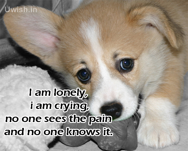 I am lonely. i am crying. No one sees the pain and No one knows it