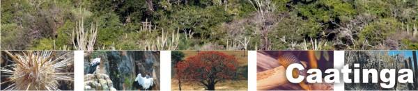Caatinga Nordestina - 1