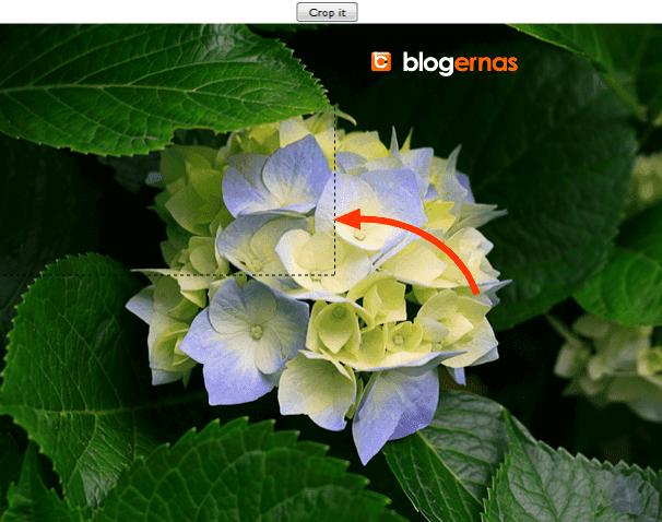 Cara Cropping Online Foto di Situs Resize