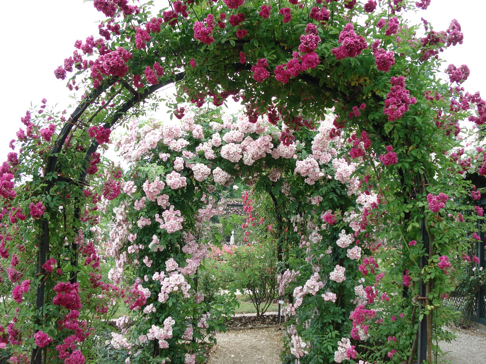 French Beauty Mark: The Rose Garden at L'Hay-les-Roses Paris