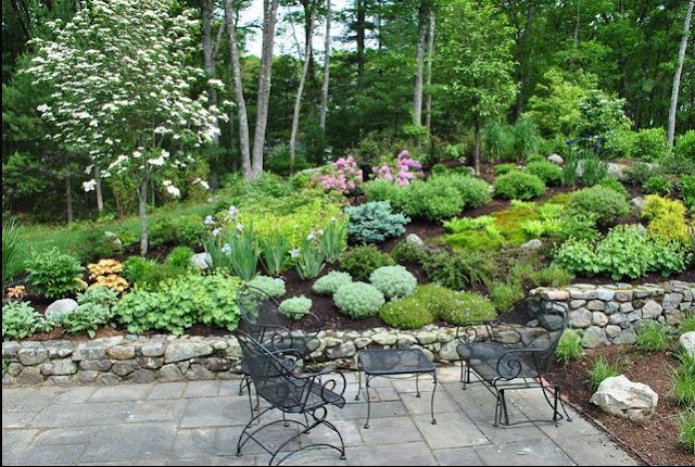 plantings for a slop in back yard wooded area patio