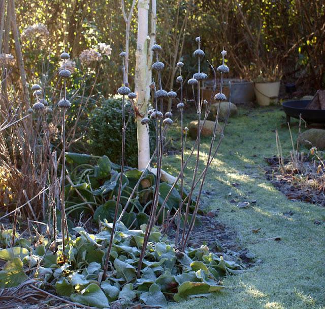 Sådan gør du haven spændende om vinteren