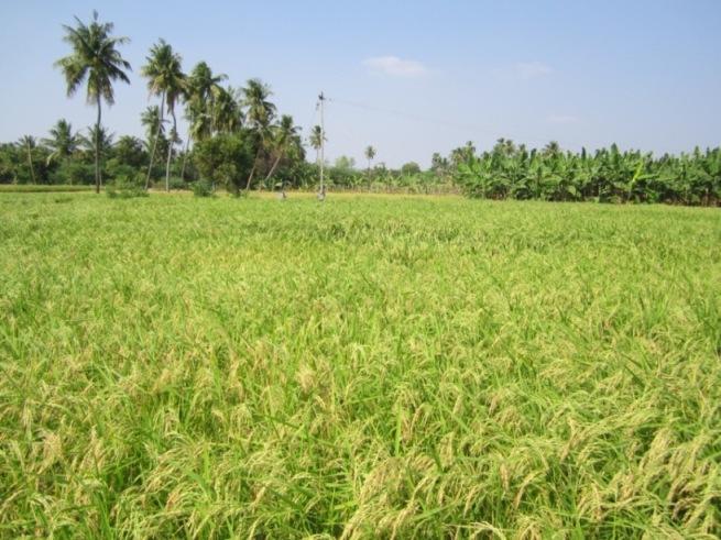 saw in tamil