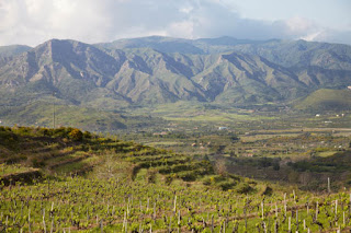 Italian Red Wines from the slopes of Mt Etna