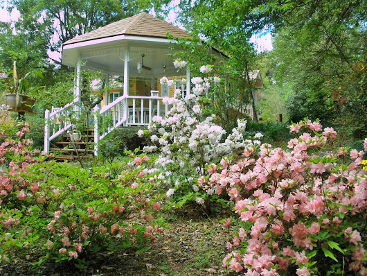 {Our Gazebo and Azaleas}