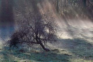 ciruelo, frutal, paisajes de Galicia, niebla, luz, escarcha, Munimara