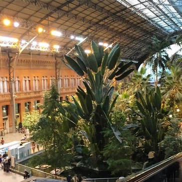 Jardín tropical Estación Atocha Madrid