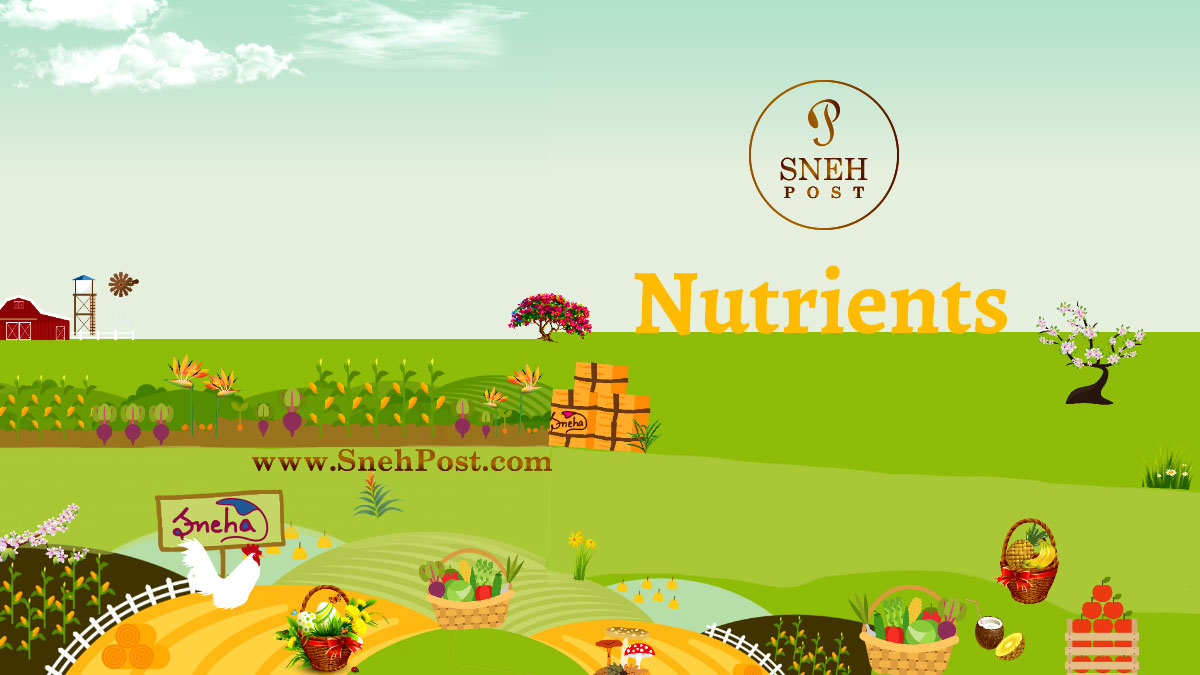 Nutrients: Vastly knowledgeable nutrition guide illustration by Sneha