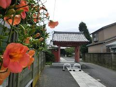 本興寺のノウゼンカズラ
