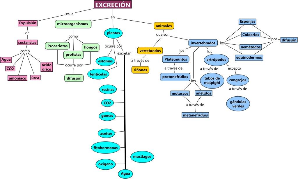 Ciencias Naturales Jesica Rocha: La excreción