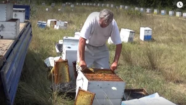 Ένας πλούσιος τρύγος στον Ηλίανθο απο τον επαγγελματία μελισσοκόμο Μόσχο Ντιώνια VIDEO
