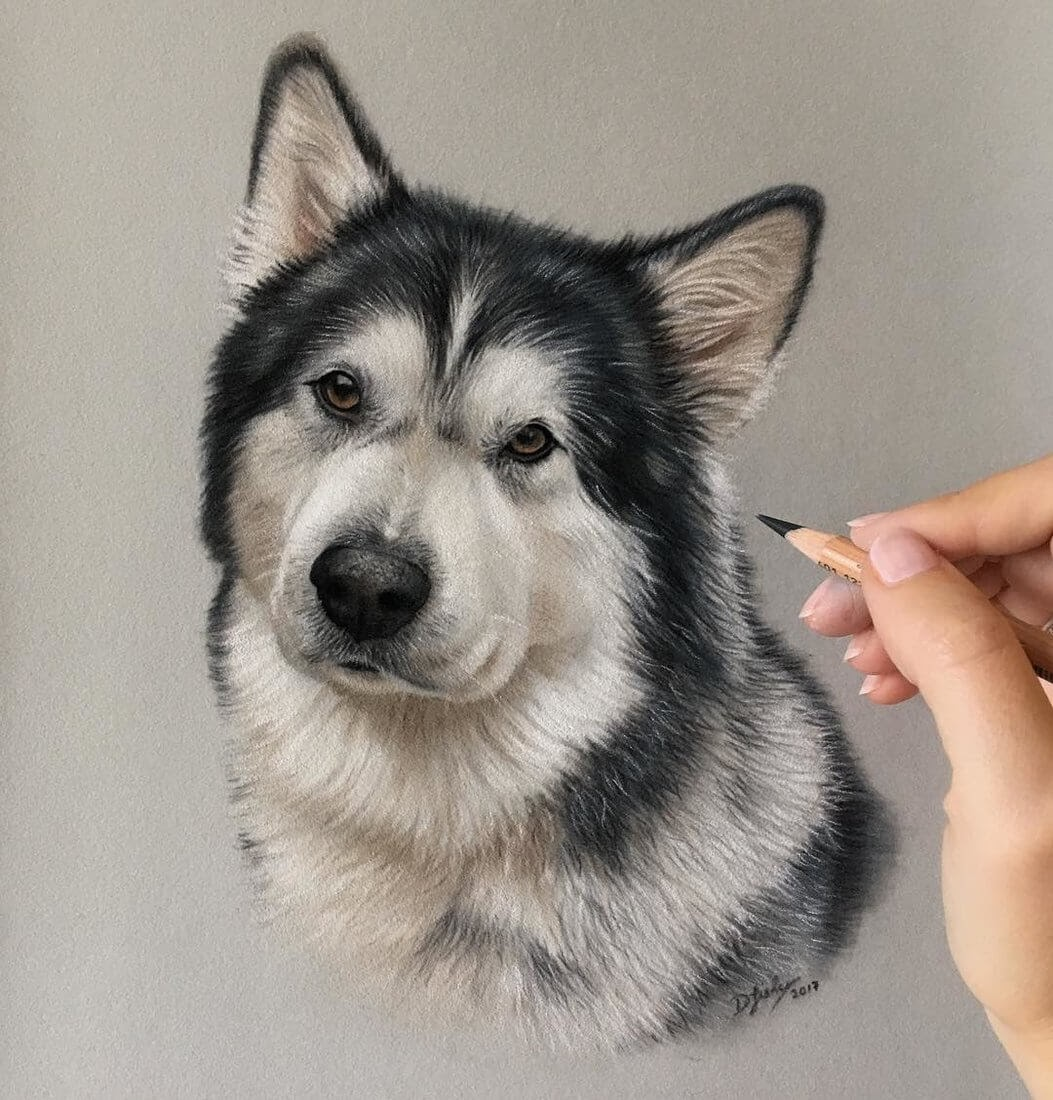 06-Alaskan-Malamute-Danielle-Fisher-Realistic-Animal-Portrait-Pastel-Drawings-www-designstack-co