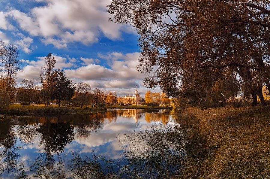 Колпино. Осень золотая