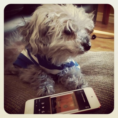 Murchie lays on a brownish-grey pillow, his paws stretched in front of him. He wears his blue and white t-shirt. Touching his paws his a white iPod with Interpreter of Maladies's orange-tinged cover on its screen. The cover features two lit candles, one of them more shadowed than the other.