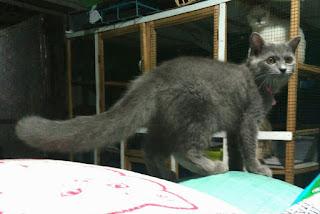 Harga Kucing Anggora Segitu Petshop