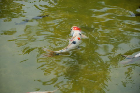 Hakone Garden, Saratoga