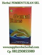 Gamat kapsul - Herbal jantung bocor di surabaya - sidoarjo