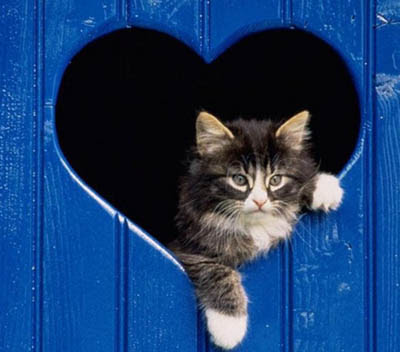 Wallpaper On The Net Cat In Heart House