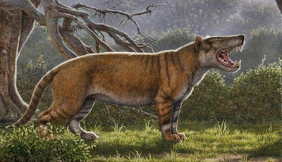 Fosil Kucing Predator Prasejarah Raksasa Ditemukan Di Kenya