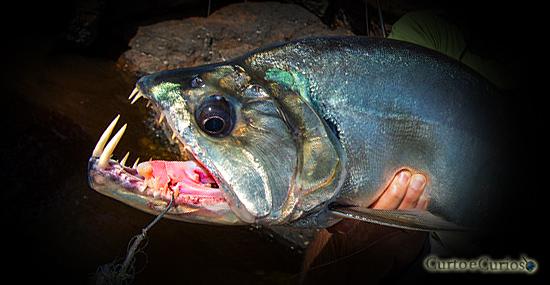 5 animais de água doce que são mais aterrorizantes que um tubarão