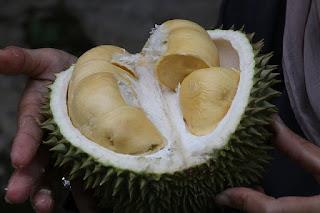 7 Manfaat Mengkonsumsi Buah Durian