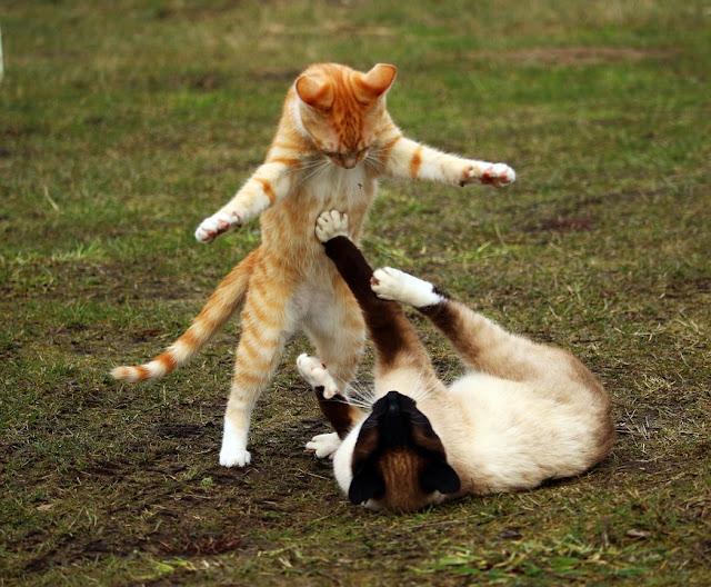 Tudo sobre comportamento felino