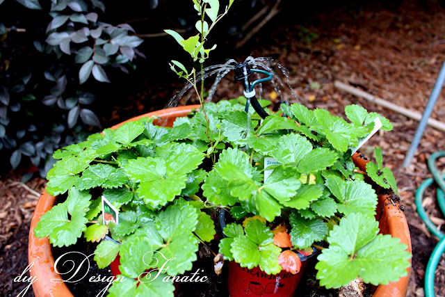 install a simple drip irrigation system, drip irrigation kit, backyard veggie garden, raised beds, diydesignfanatic.com