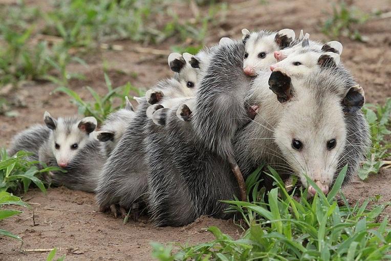 Hewan-hewan yang Memiliki Pertahanan Diri Paling Menakjubkan